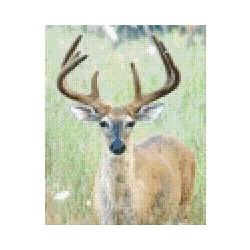 Deer in Grass