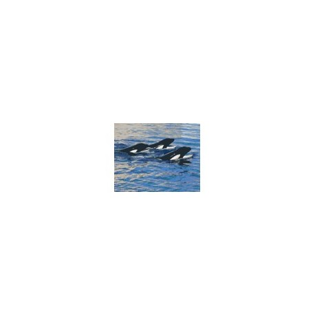 Three Whales