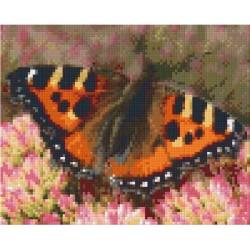 Butterfly on Sedum Bush