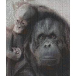 Mother and Baby Orang utan