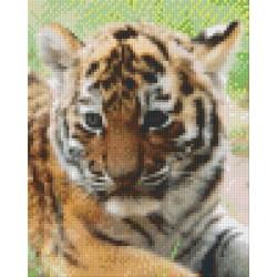 Tiger Cub Face