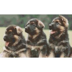 Three German Shepard Pups