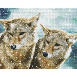 Wolfs in Snow