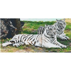 Two Resting White Tigers