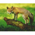 Fox on a Branch