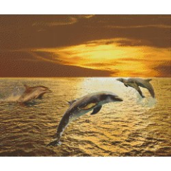Dolphins in Sunset