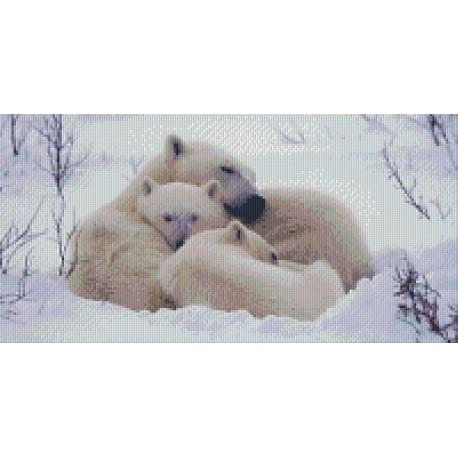 Polarbear Family